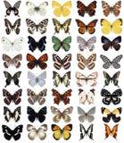 40只蝴蝶 免版税库存照片