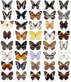 40 бабочек Стоковые Фотографии RF