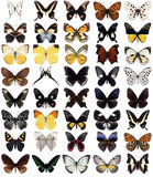 40 butterflies royalty free illustration
