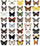40  butterflies Royalty Free Stock Photo