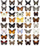 40  butterflies Royalty Free Stock Photos