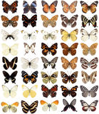 40 butterflies Royalty Free Stock Photos