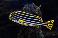 40 tropikalnych ryb Zdjęcia Royalty Free