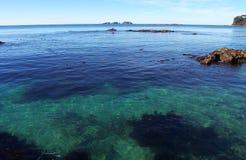 鲜绿色海洋 免版税库存照片