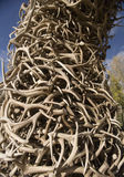 401 Stack of Antlers from the Elk reserve Stock Photo