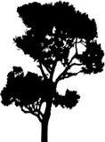 41查出的剪影结构树 库存图片
