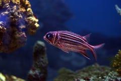 41 рыба тропическая Стоковые Фото
