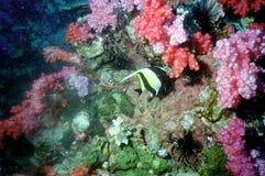 41 andaman珊瑚海惊奇的世界 库存照片