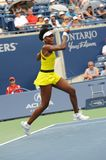 41 venus williams rogers 2009 чашек Стоковое фото RF