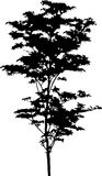 43查出的剪影结构树 图库摄影