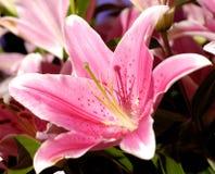 44 blommor Royaltyfri Fotografi