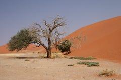 45沙丘 免版税图库摄影