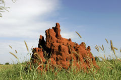 46 Termite Mound royalty free stock photography
