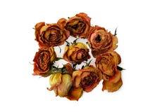 49朵干燥玫瑰 免版税库存照片