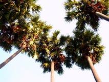 49棕榈树 免版税库存照片