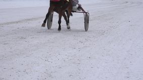 Ноги лошади гонки с всадниками в тележках колеса состязаются на снежном следе в зиме 4K акции видеоматериалы