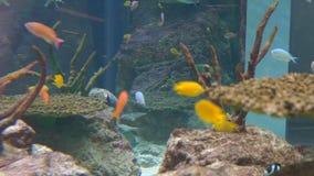4K Aquarium Background Video. stock footage