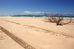 4WD Tracks on Beach royalty free stock photography