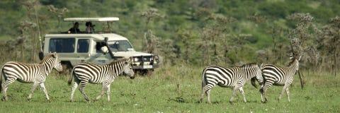 4x4 μέτωπο που περνά τα zebras Στοκ Εικόνες