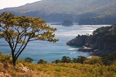 5个海岸线结构树 免版税库存照片
