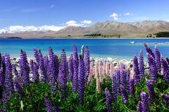 5个湖淡紫色tekapo 库存照片
