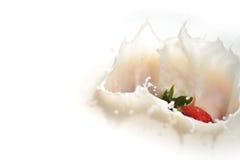 5个牛奶系列草莓 库存照片