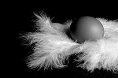 5个蛋羽毛 库存图片
