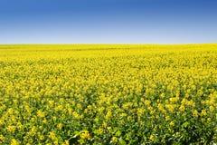 5农场 免版税库存图片