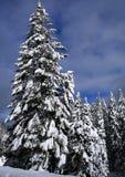 5包括雪结构树 免版税库存照片
