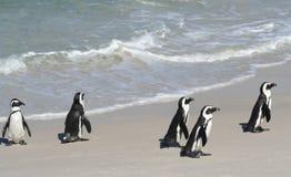 5只企鹅 免版税图库摄影