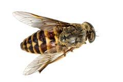 5只停止的昆虫 免版税库存图片