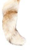 5只狐狸查出的尾标 免版税图库摄影