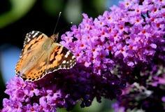 5只蝴蝶夫人被绘 库存照片