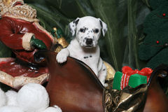 5只达尔马提亚狗小狗s圣诞老人雪橇 库存照片