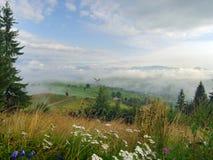 5多山的草甸 免版税库存照片
