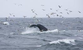 5尾标鲸鱼 免版税库存图片