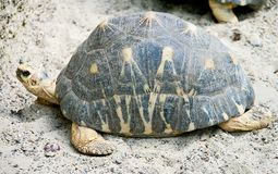 5放热的草龟 库存图片