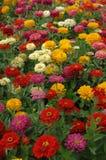 5朵五颜六色的花 免版税库存照片
