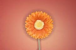 5朵花桔子 库存图片