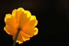 5朵花黄色 免版税库存图片