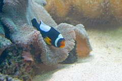5条异乎寻常的鱼 免版税库存图片