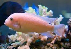 5条水族馆鱼 免版税库存图片