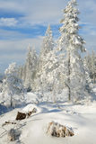 5森林没有多雪 免版税库存图片