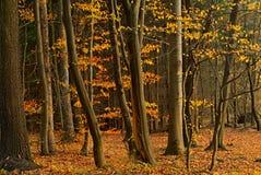 5森林 图库摄影