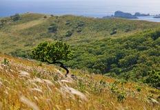 5海岸线结构树 免版税图库摄影