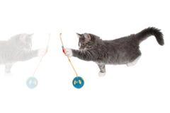 5演奏时间的逗人喜爱的小猫 免版税库存照片