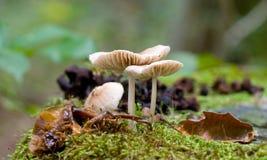 5蘑菇 图库摄影