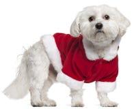 5马尔他老成套装备圣诞老人佩带的年 免版税库存照片