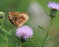 5 πεταλούδα αριθ. στοκ εικόνες