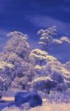 5 υπέρυθρες ακτίνες Στοκ φωτογραφία με δικαίωμα ελεύθερης χρήσης